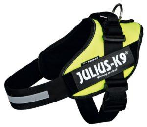Pettorina Julius K9